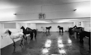 Horses in Roman gallery