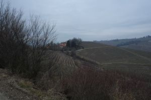 The Langhe hills between Alba and Barbaresco